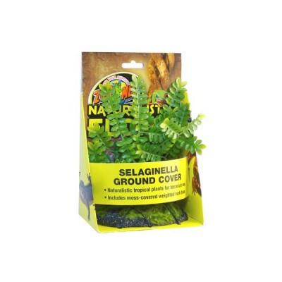Selaginella - Plante atificielle de sol