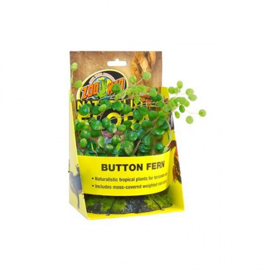 Button Fern - Plante de sol artificielle