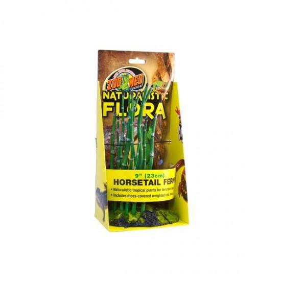 Horsetail Fern bambou - Plante de sol