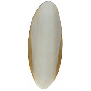 Os de seiche x2 (calcium pour tortues) Trixie