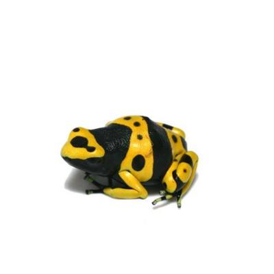 Dendrobates leucomelas - Grenouille jaguar