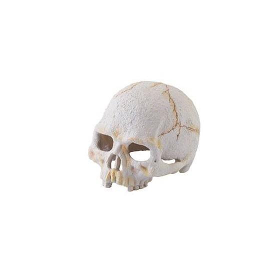 "Crâne de primate ""Exoterra Primate Skull"""