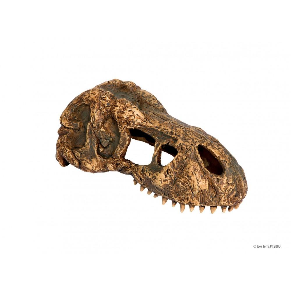 """Crâne de T-Rex """"Exoterra T-REX Skull"""""""