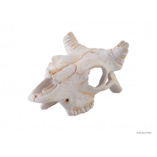 """Crâne de vache """"Exoterra Buffalo Skull"""""""
