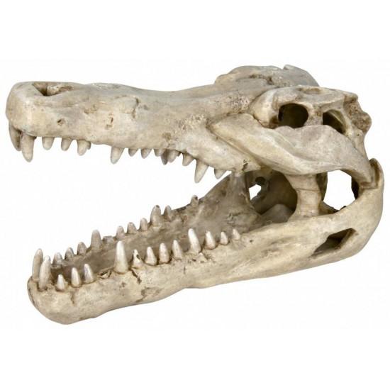 Crâne de crocodile TRIXIE