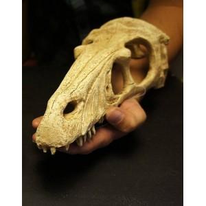 """Crâne de Raptor """"Komodo"""""""