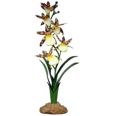 """Orchidée araignée """"Spider orchid"""" Komodo 40cm"""