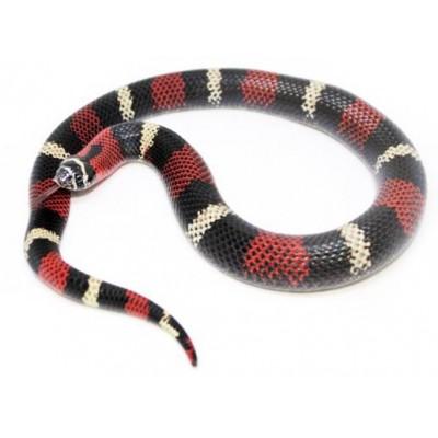 Lystrophis pulcher - Serpent à groin sud-américain