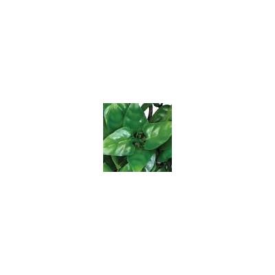 "Plante plastique ""Philodendron Plant"" Komodo"
