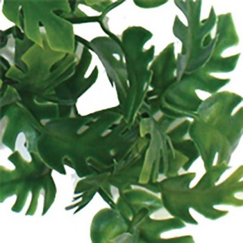 Jungle plant philodendron split KOMODO