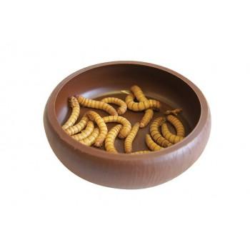 "Gamelle pour vers de farine ""Mealworm Dish"" Komodo"