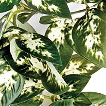 Hanging plant terrarium decoration Komodo