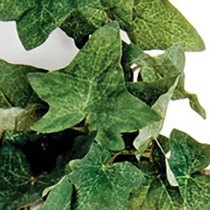 """Pante artificielle en tissu """"Comores Silk Vine"""" Komodo"""