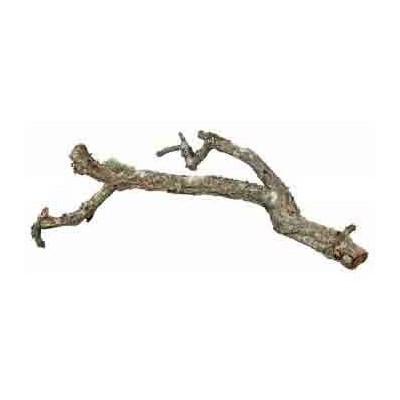Branche de liège 40-50cm