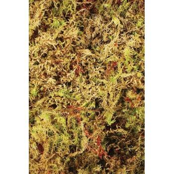 """Mousse de forêt 100% Naturelle """"Habitat Moss"""" - Komodo"""