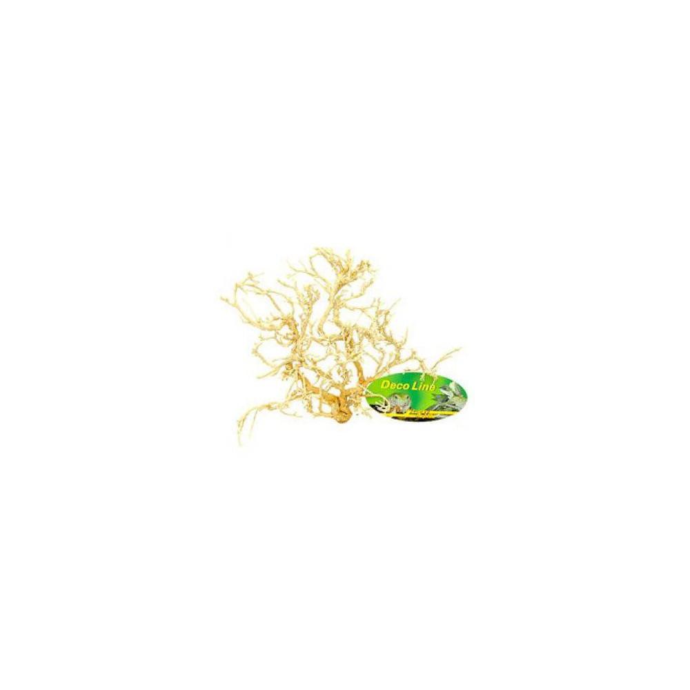 Buisson sec de désert blanchi 100% naturel - Lucky Reptile