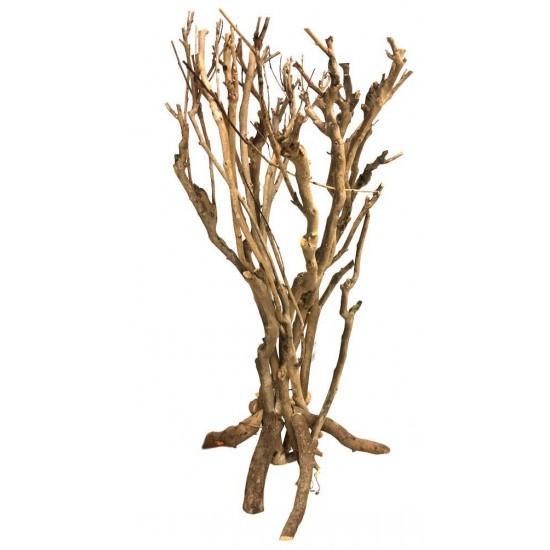 Arbuste de savane - Lucky Reptile