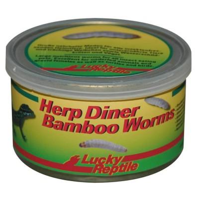 Vers de bambou pour insectivores - Lucky Reptile