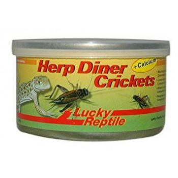 """Grillons en boîte de conserve """"HerpDiner Crickets"""" LUCKY REPTILE"""
