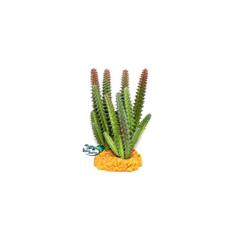 Cactus buisson Terratlantis