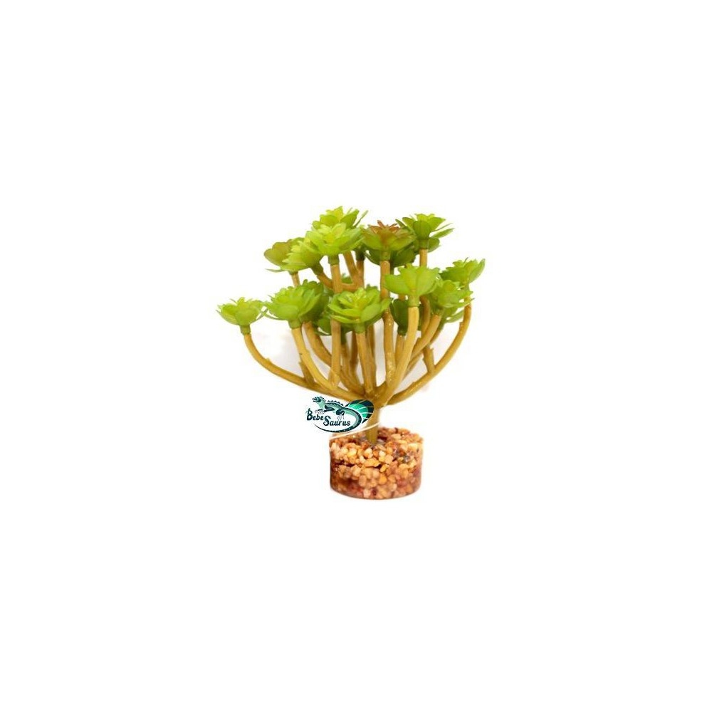 Plante succulente verte Terratlantis