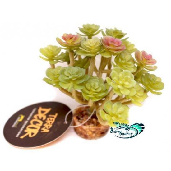 Plante succulente vert clair Terratlantis