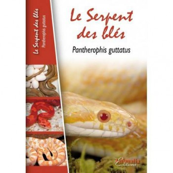 Le serpent des blés-Pantherophis guttatus