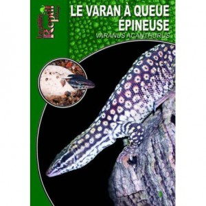 Le varan à queue épineuse- Varanus acanthurus- Les guides Reptilmag