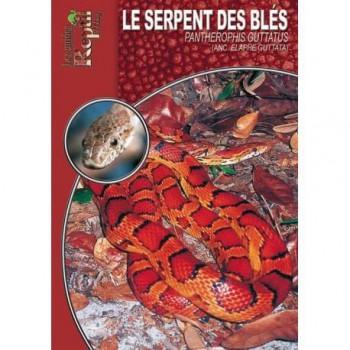 Le serpent des blés- Elaphe guttata- Les guides Reptimag