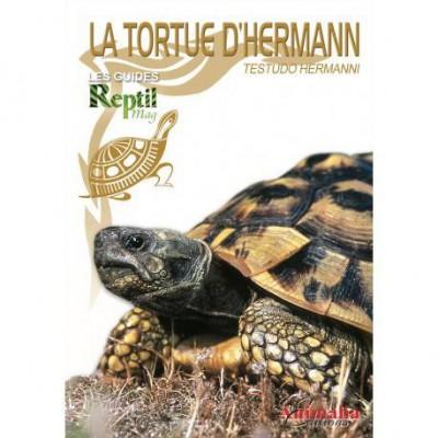 La tortue d'Hermann- Testudo hermanni- Les guides Reptilmag