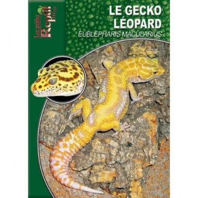 Le gecko léopard- Eubepharis macularius- Les guides Reptilmag