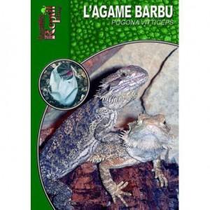 L'agame barbu- Pogona vitticeps- Les guides Reptilmag