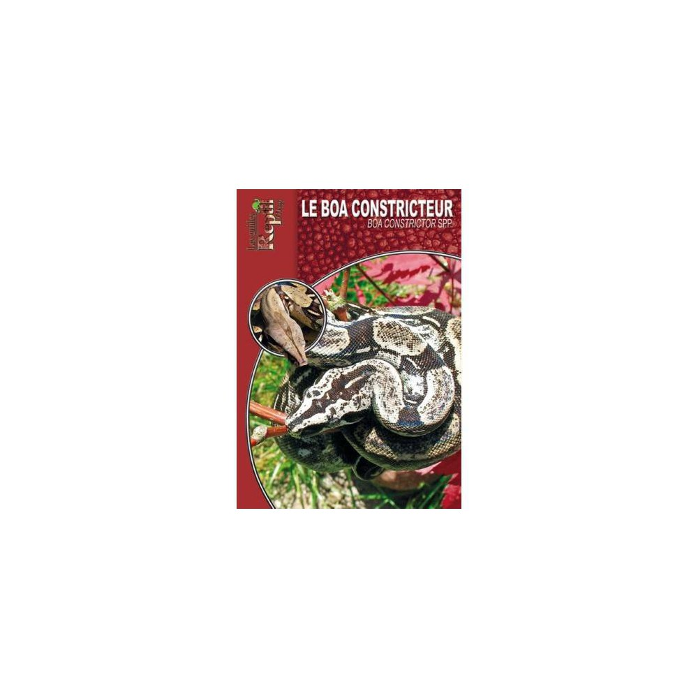 Le Boa constricteur- Boa constrictor ssp- Les guides Reptilmag