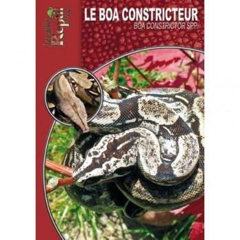 Le Boa constricteur- Boa constrictor ssp- Les guides Reptilmag