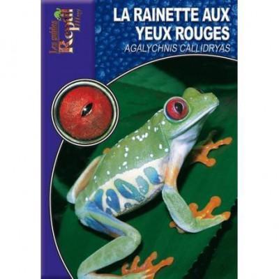La rainette aux yeux rouges- Agalychnis callidryas- Les guides Reptilmag
