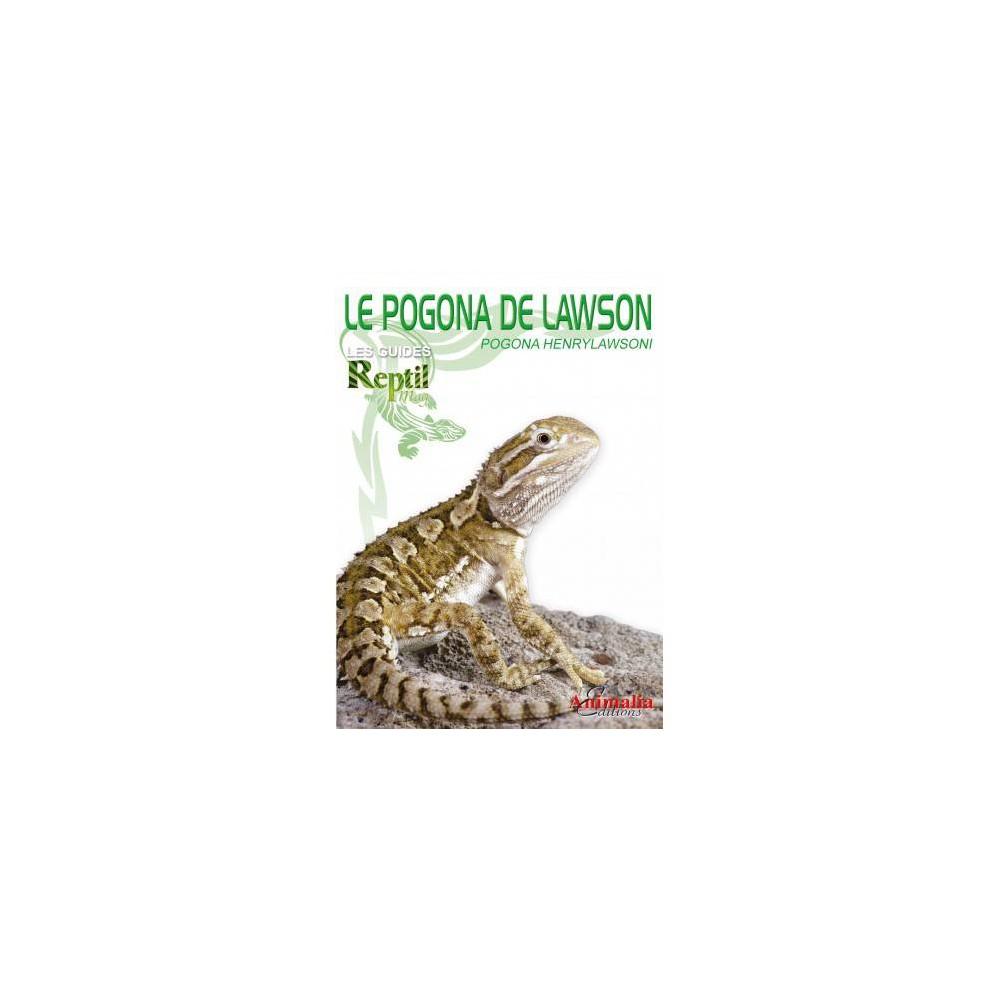 Le Pogona de Lawson- Pogona henrylawsoni