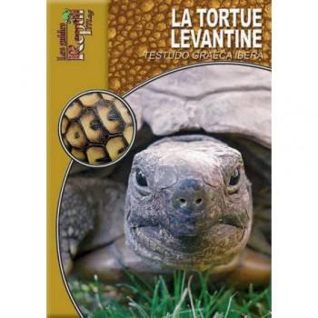 La tortue levantine- Testudo graeca ibera- Les guides Reptilmag