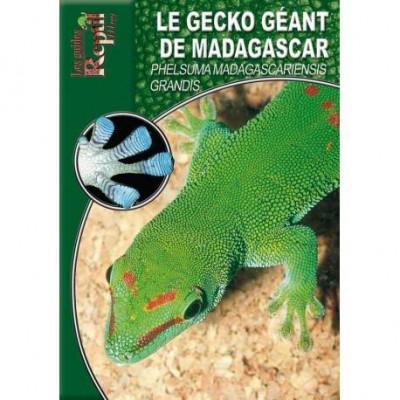 Le gecko géant de Madagascar- Phesuma madagascariensis grandis- Les guides Reptilmag