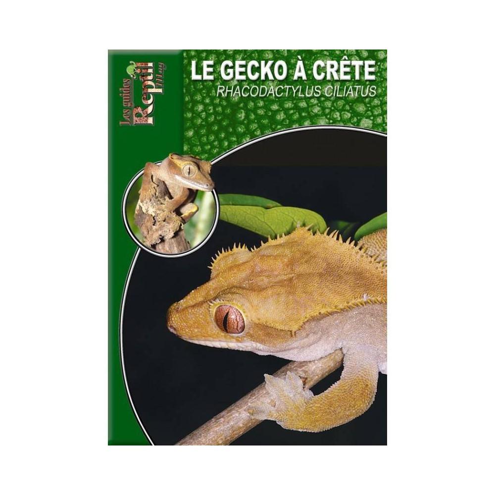Le gecko à crête- Rhacodactylus ciliatus- les guides Reptilmag