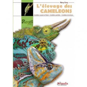 L'élevage des camélons -Caméléon casqué- Caméléon panthère- Caméléon de jackson