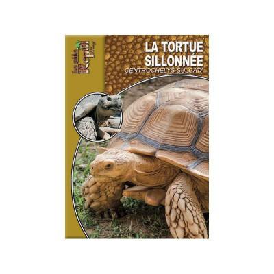La tortue sillonnée- Centrochelys sulcata- Les guides Reptilmag