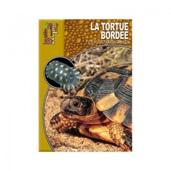 La tortue Bordée- Testudo marginata