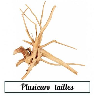 Racine araignée 30/50 cm -...