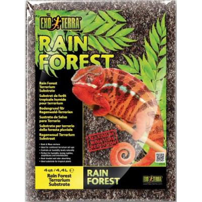 Substrat de forêt tropicale...