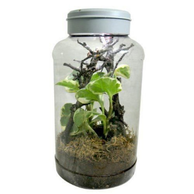 "Nano terrarium ""Insec..."