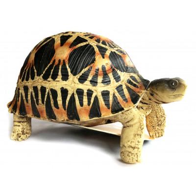 Figurine tortue étoilée -...