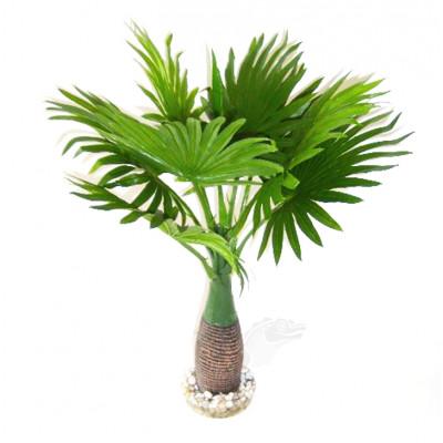 Palmier à feuilles rondes 40cm