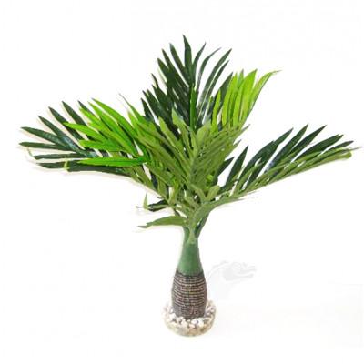 Palmier à feuilles longues...