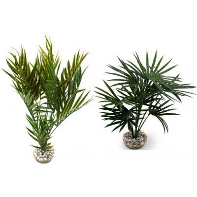 x2 Palmiers assortis 26/35cm