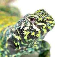 Élevage reptiles Lyon